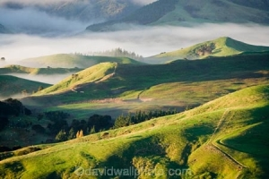 Misty Farmland near Martinborough, Wairarapa, North Island, New Zealand